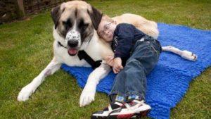 perro-tres-patas-niños